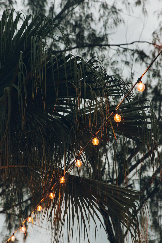 Festoon lighting in the palm trees.
