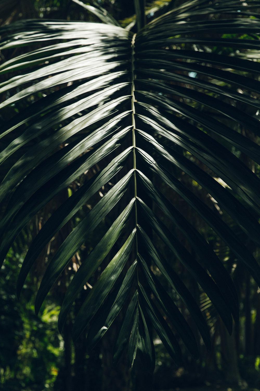 Haarkon in Barbados - Andromeda Gardens.