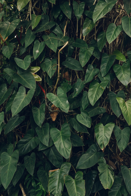 Hunte's Garden in Barbados.
