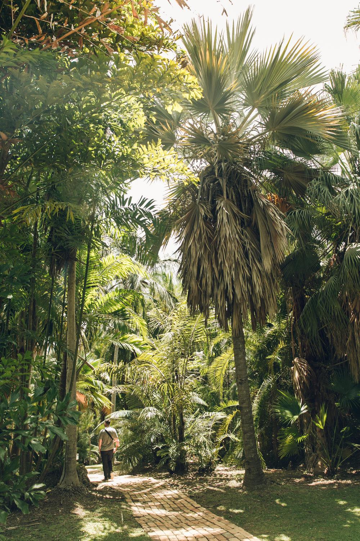 Andromeda Gardens in Barbados.