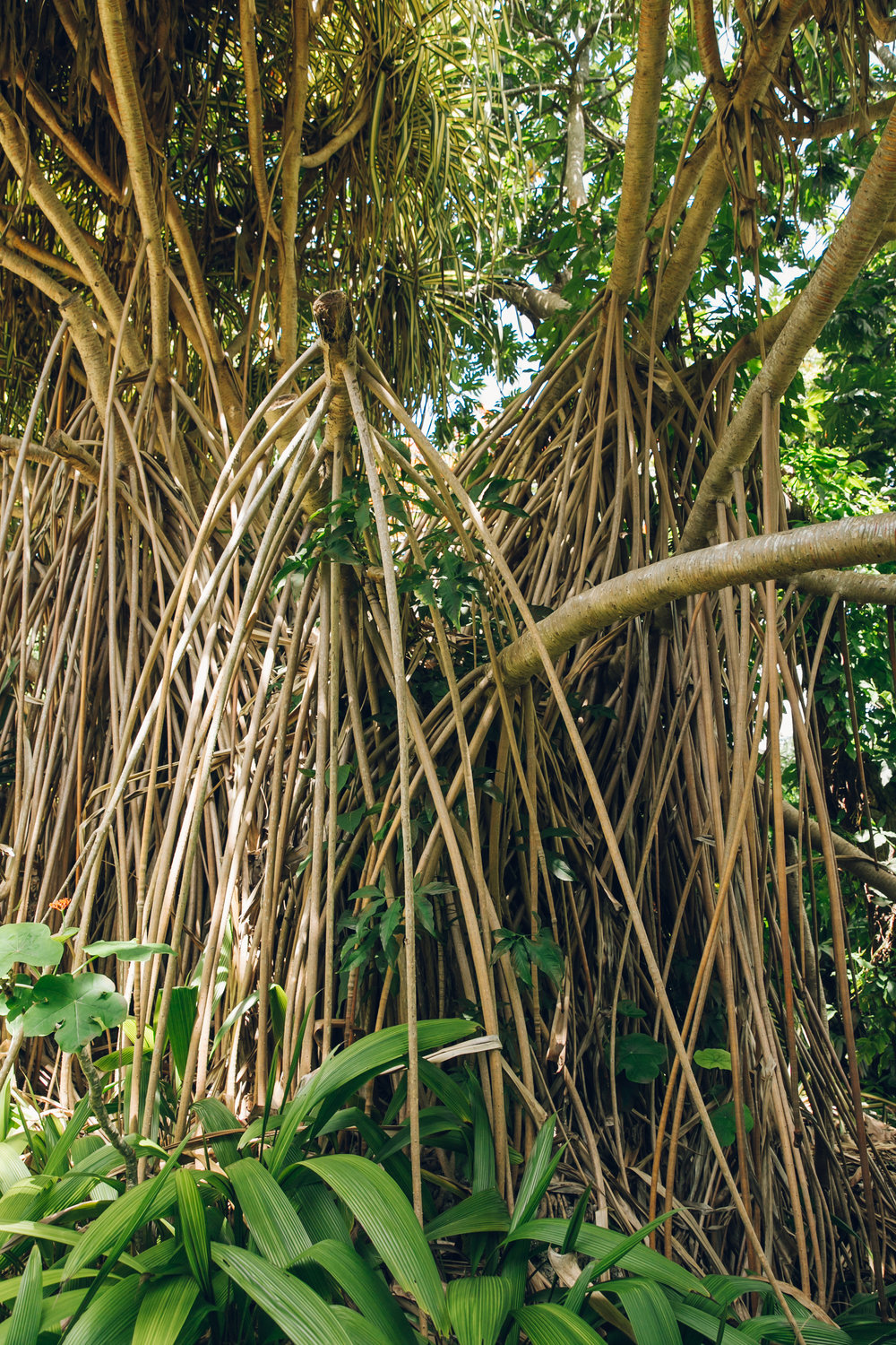 Botanical Gardens in Barbados — Haarkon | Adventures and Studio