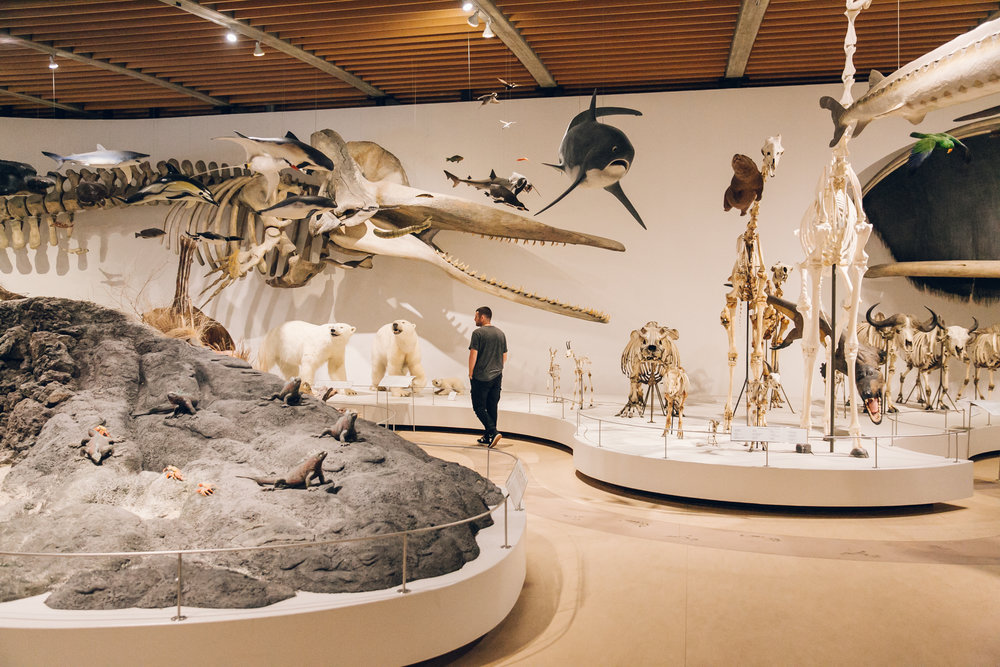 72 hours in Copenhagen - Natural History Museum.