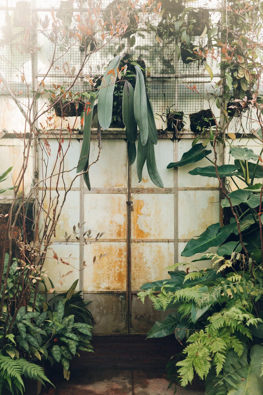 The Royal Botanic Gardens in Melbourne, Australia.