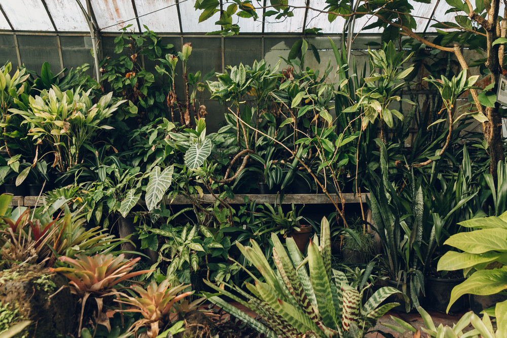 The Royal Botanic Gardens in Melbourne, Australia. Haarkon Greenhouse Tour.
