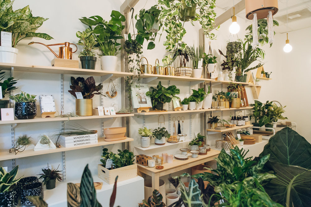 Folia Collective, a plant shop in Pasadena - Haarkon in California.