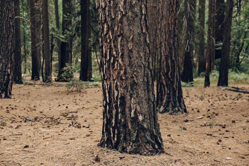 Yosemite National Park California Tree
