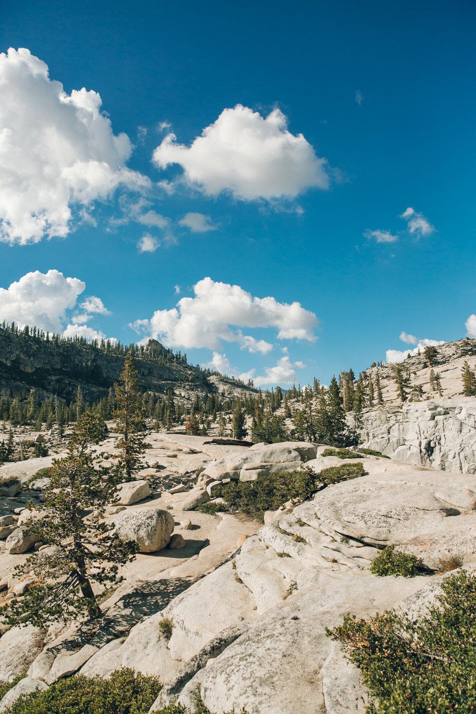Yosemite National Park California Trees