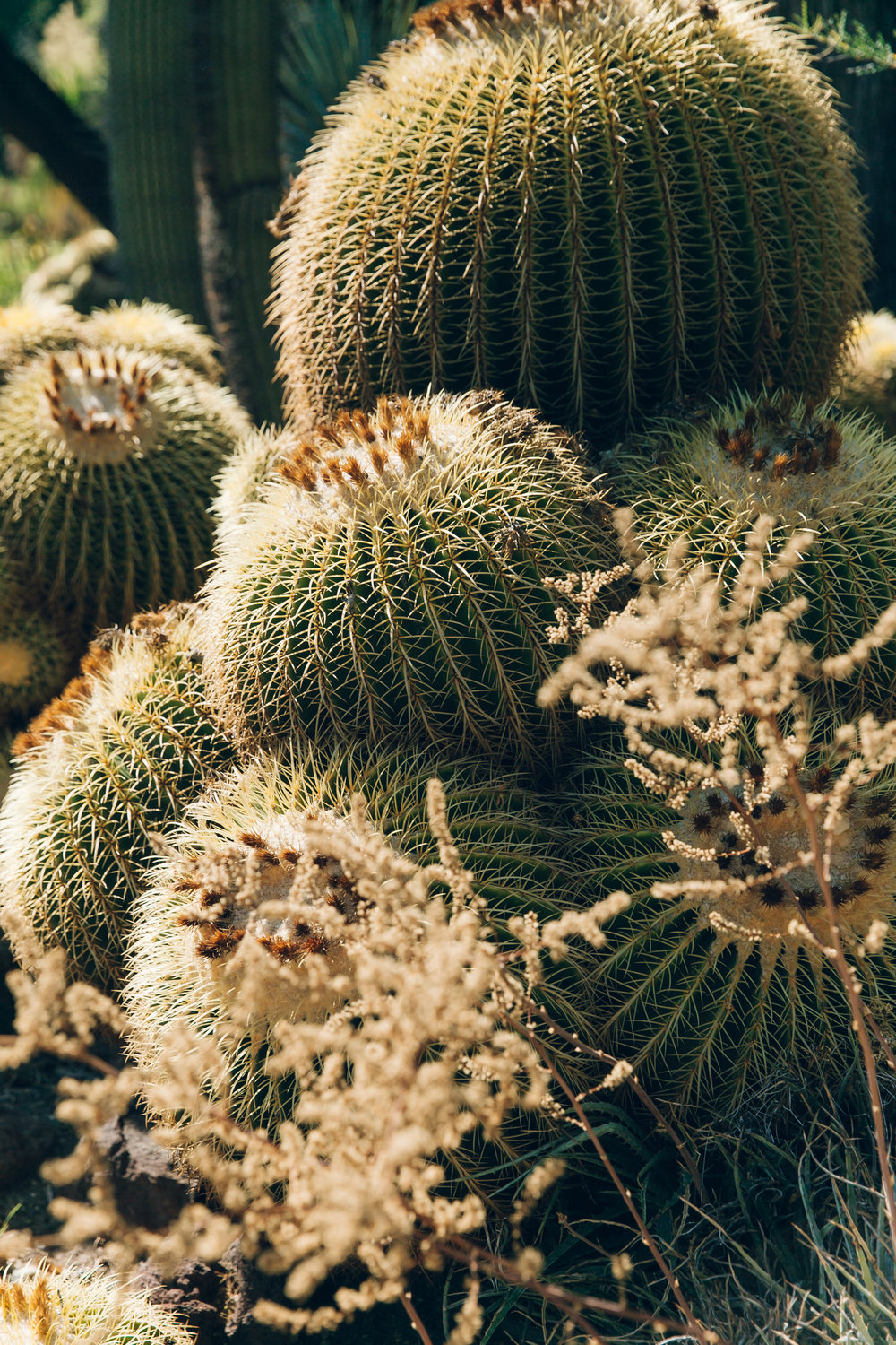 Huntington Desert Cactus Garden Close Up Cacti