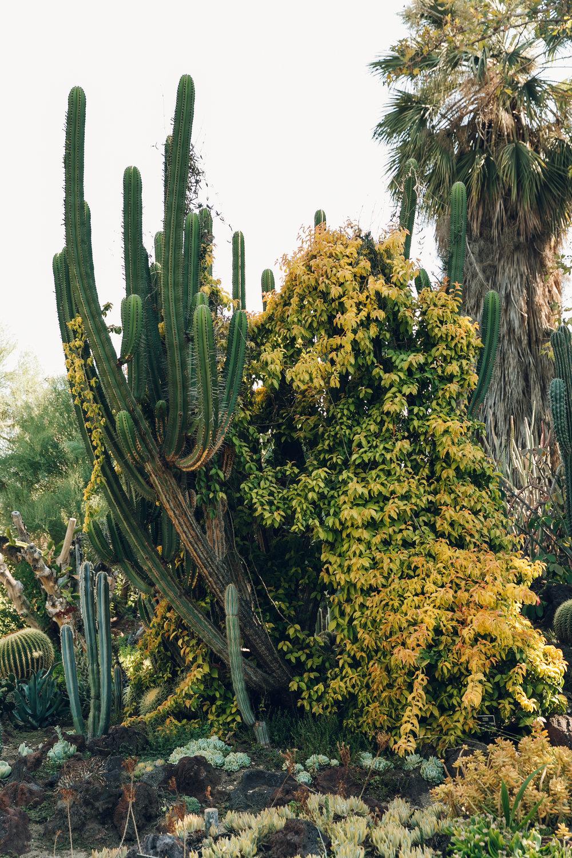 Huntington Desert Cactus Garden