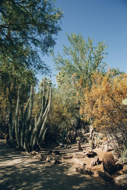 Moorten Botanical Garden in Palm Springs, California.