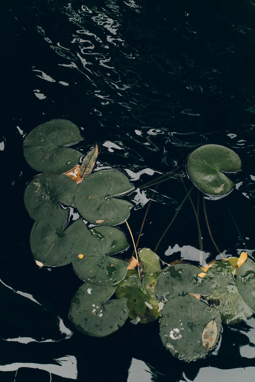 Asia Gardens Alicante Pond