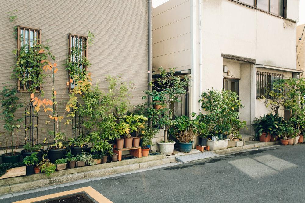 Street gardens in Tokyo - Haarkon in Japan.