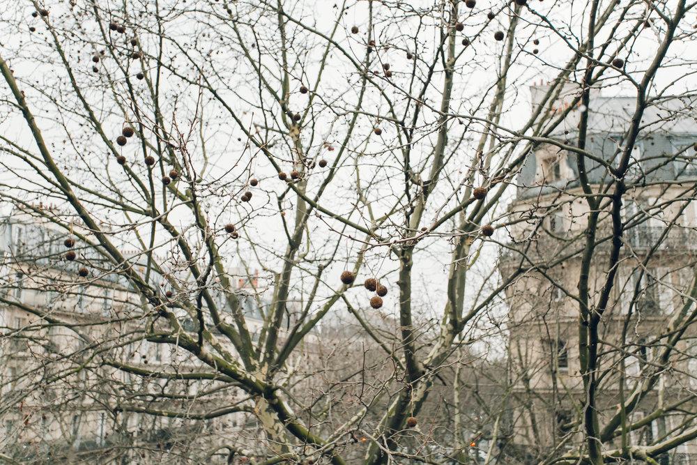 Paris in the Winter by Haarkon. Promenade Plantee.
