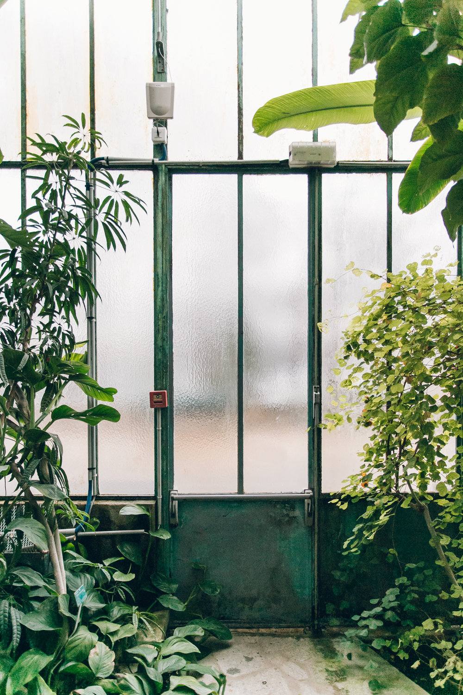 Jardin des Serres d'Auteuil - Paris