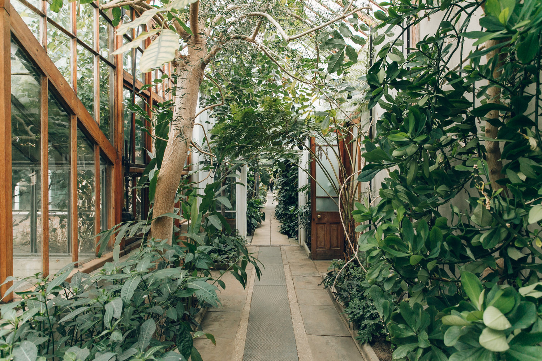 Cambridge Botanic Garden photographed by Haarkon