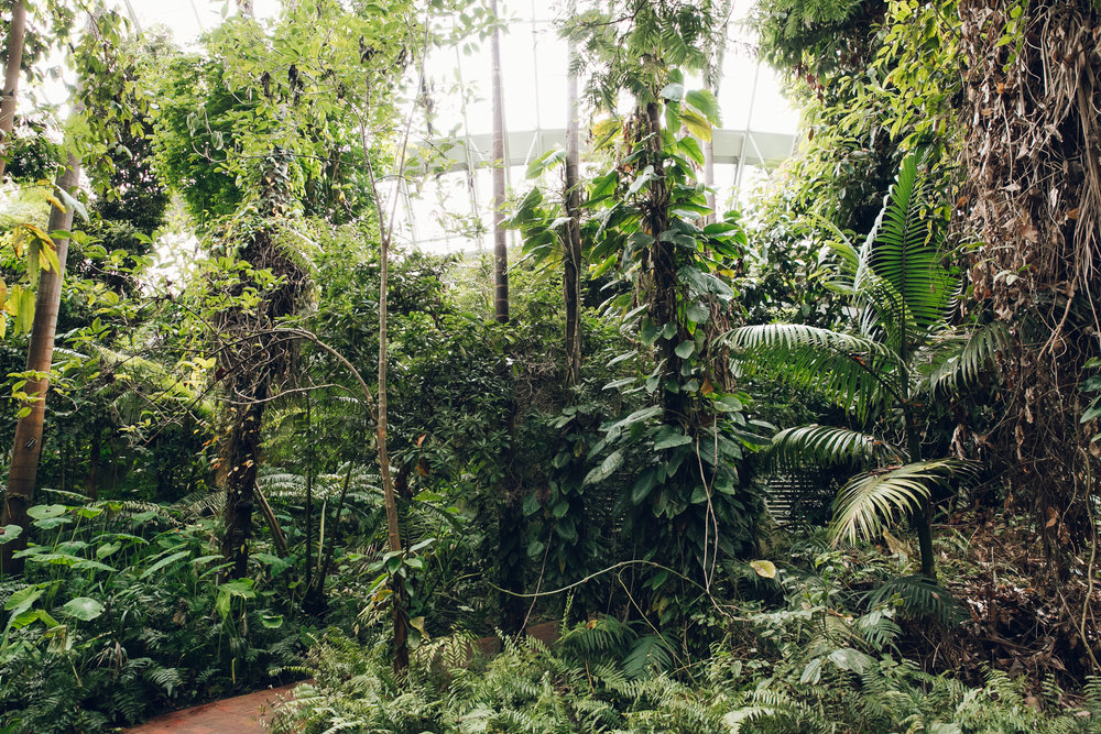 Adelaide Bicentennial Conservatory - Glasshouse Greenhouse by Haarkon