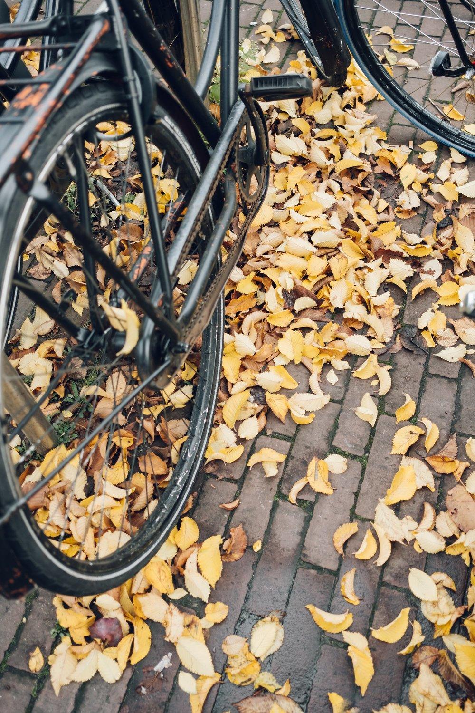 Amsterdam November 2018-52.jpg