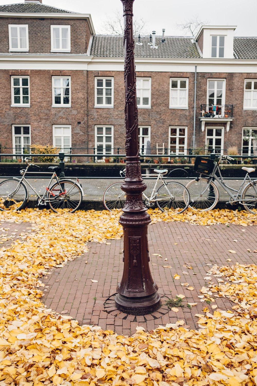 Amsterdam November 2018-23.jpg