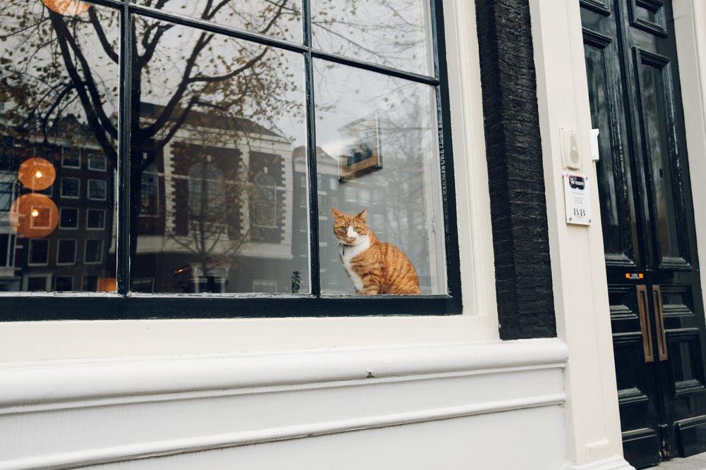 Amsterdam November 2018-155.jpg