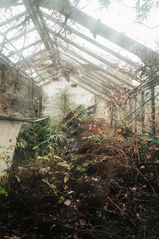 Linn Botanic Gardens by Haarkon