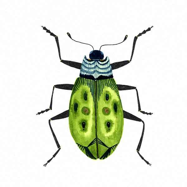 Serenity_Beetle.jpg