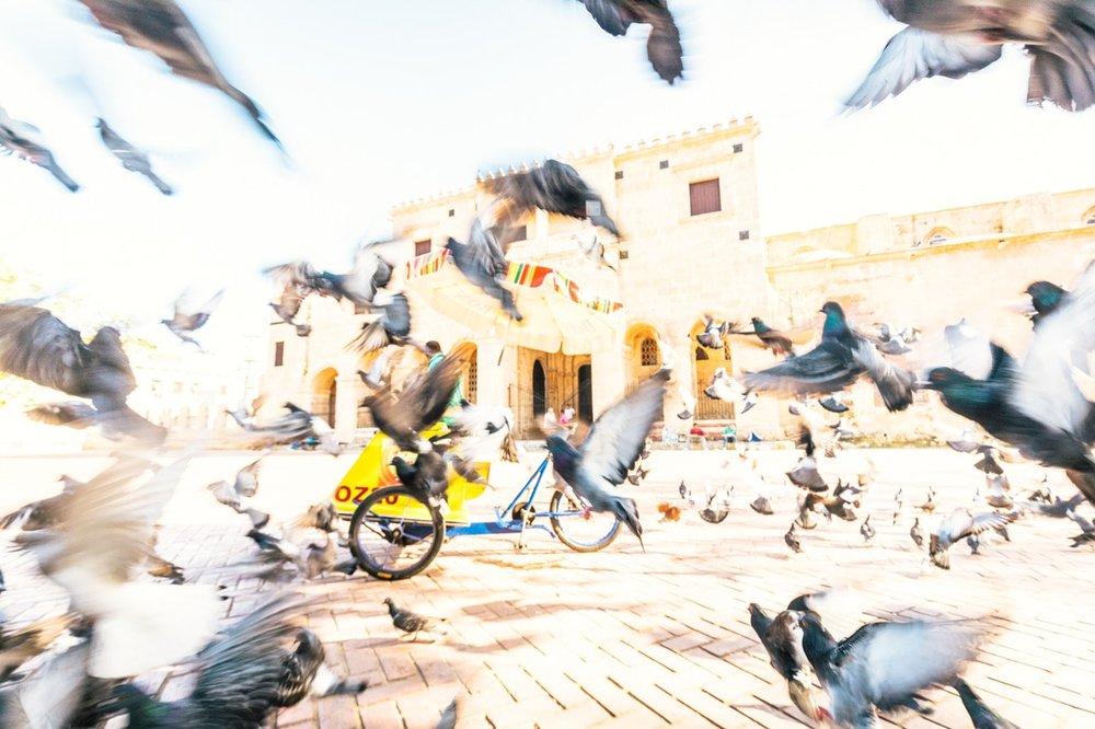 KimCarroll.com- Santo pigeons-1-min.jpeg