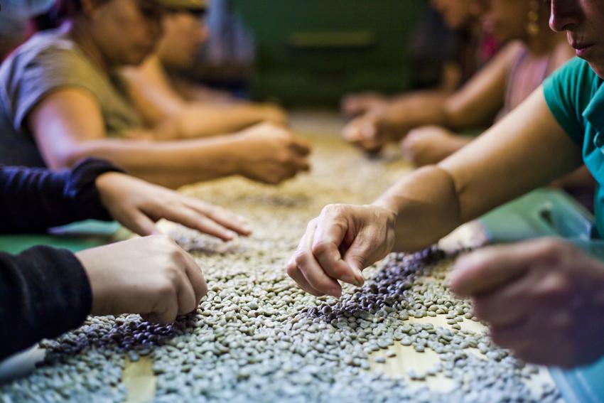 Transversalizar género en la cadena de café - Esta sistematización del proceso de aprendizaje sobre metodologías de género aplicadas por socios y aliados de la Plataforma SAFE reúne los casos vistos el taller.