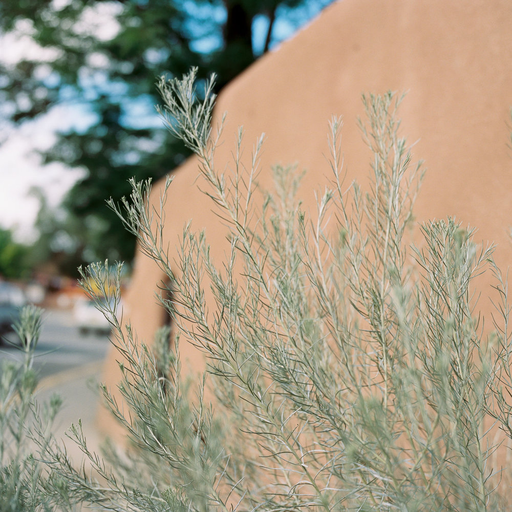 new_mexico_photos_©2017abigailbobophotography-10.jpg