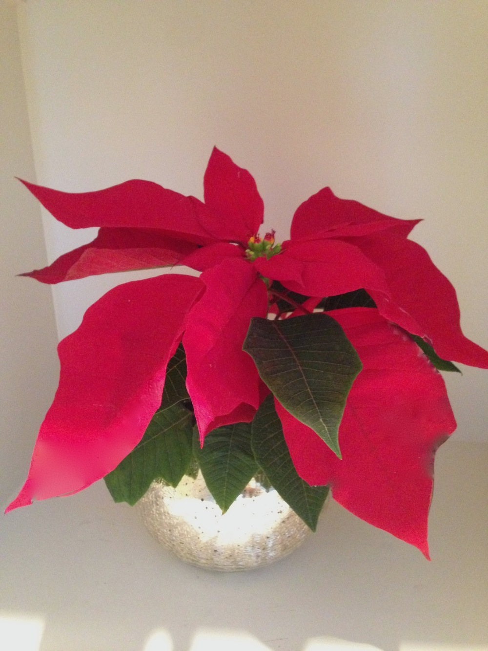 christmas decor on a budget :: christmas flowers :: SurvivingSarah.com