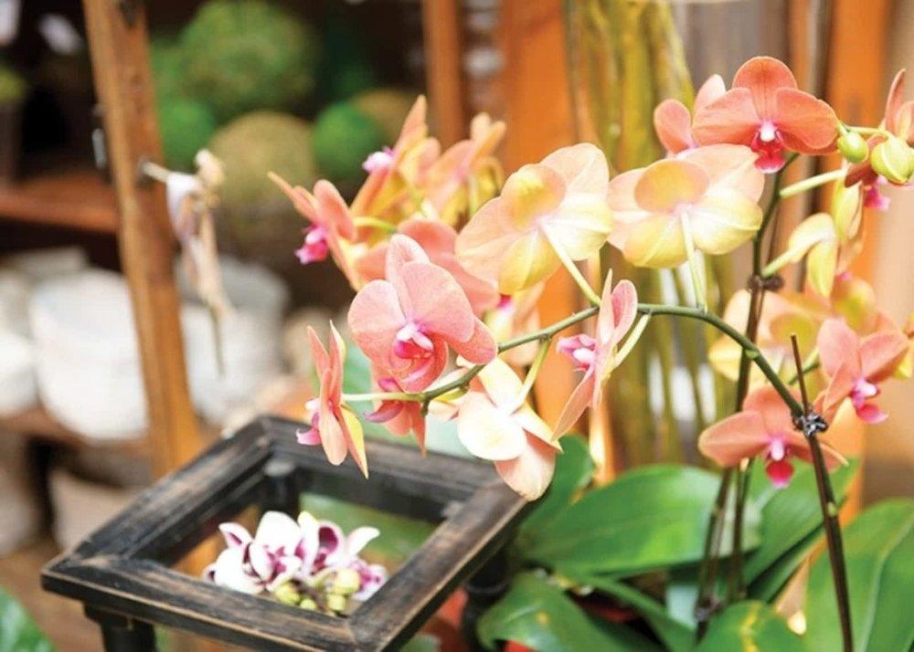 suzanne-gardner-flowers-3.jpg