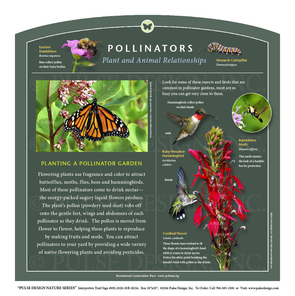 Outdoor Interpretive Nature Trail Sign In Insect Pollinator Series