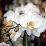 Brookside_Orchids_1754_credit_tory_putnam.jpg