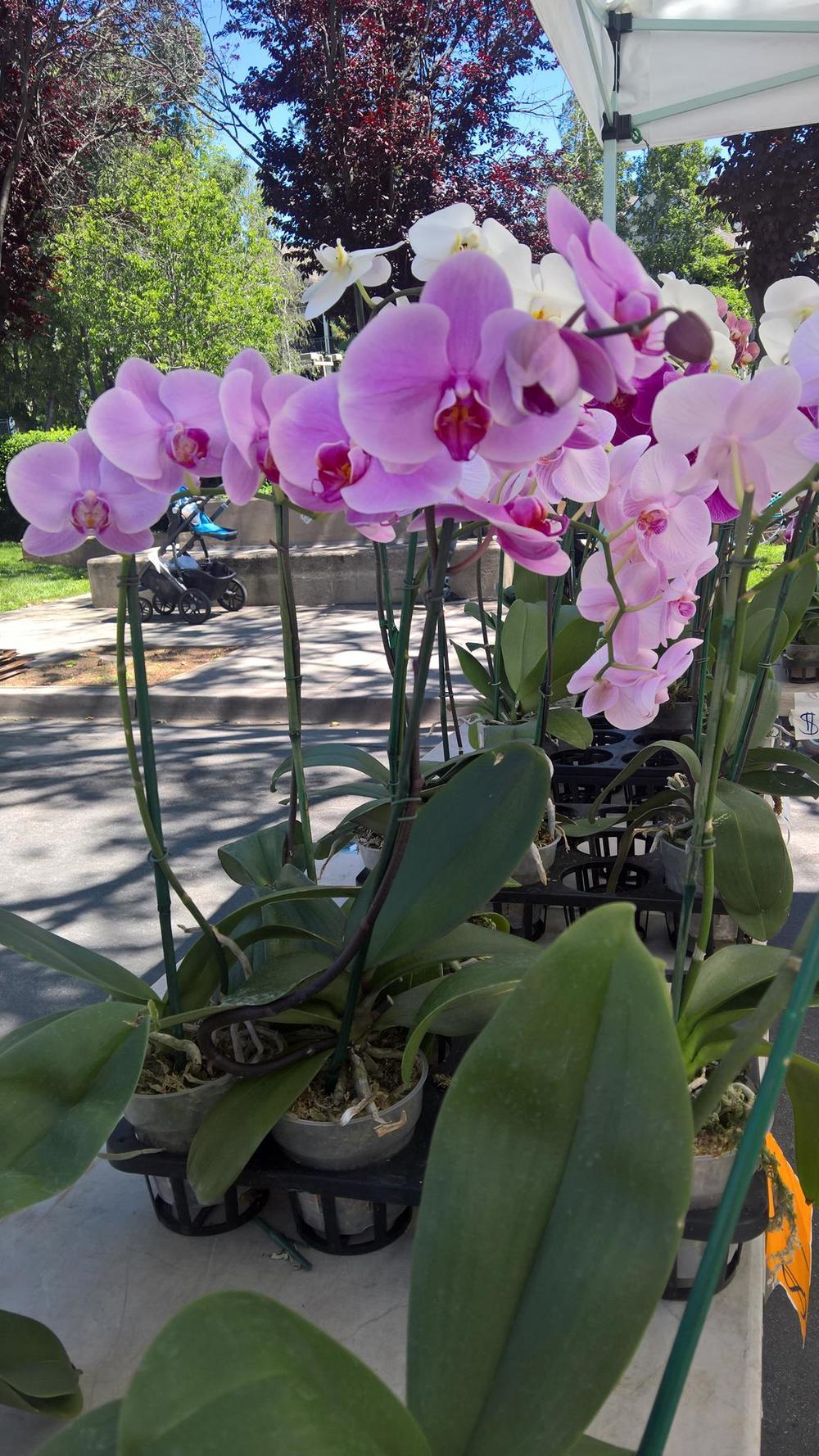 orchids.jpg