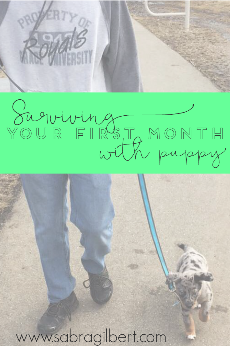 Surviving Your First Month with Your Puppy - Becoming Sabra Gilbert
