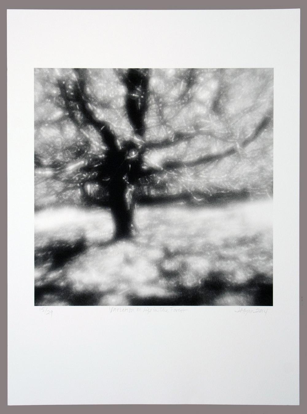 Alynn Variations.jpg