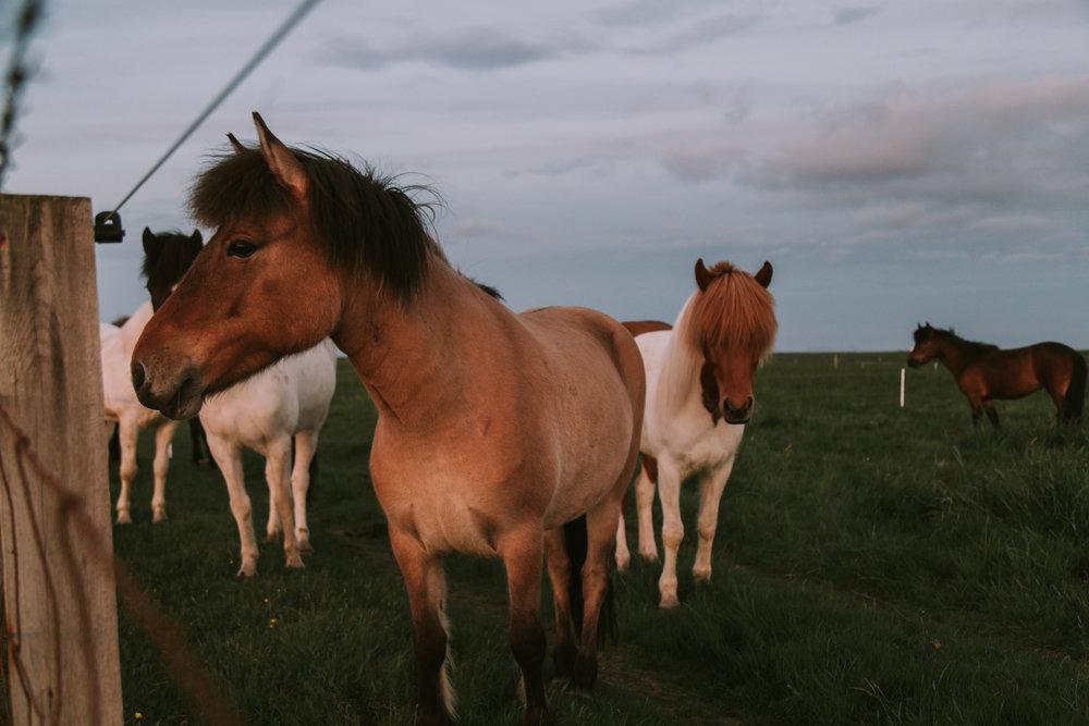 Iceland | June 16