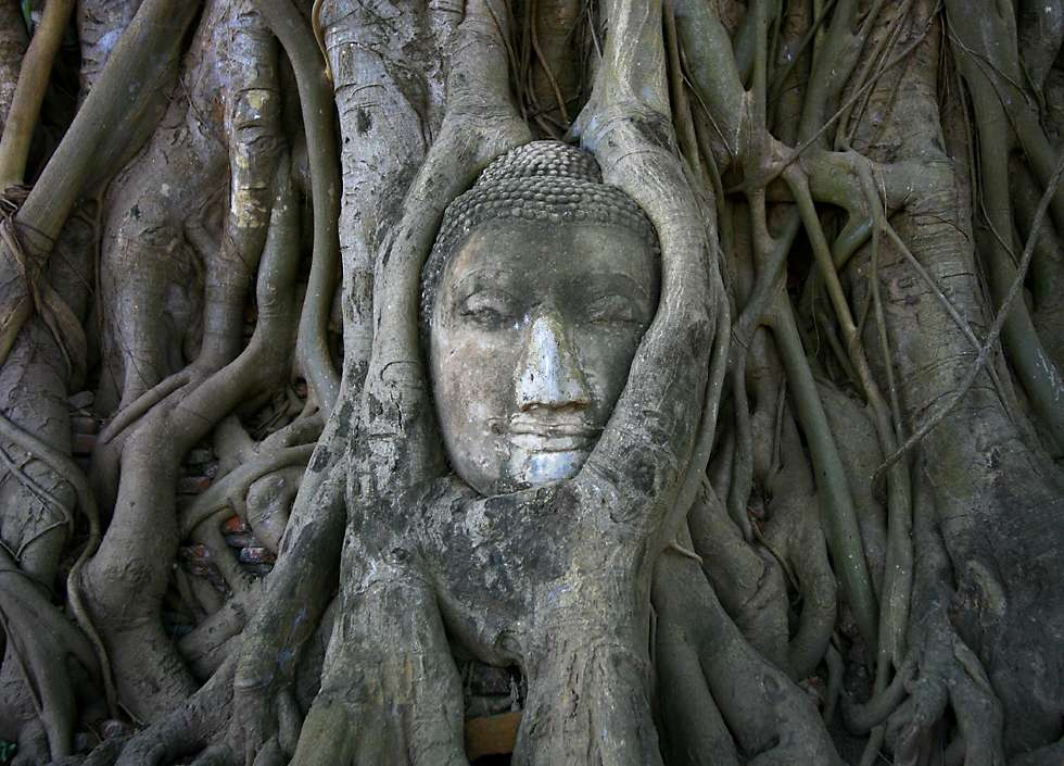 Ayahuasca and the Buddha ... A oneness with nature