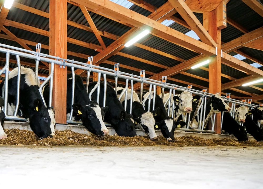 Effiziente Beleuchtung für die Landwirtschaft