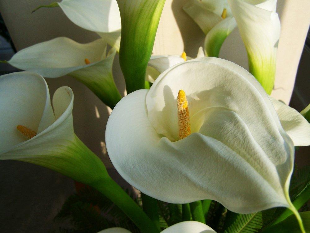 Blumenschmuck aus München-Sendling