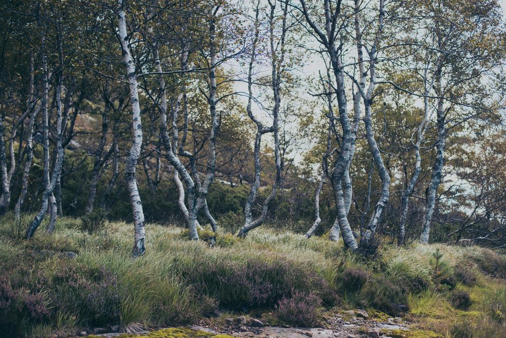 Norwegen-041.jpg