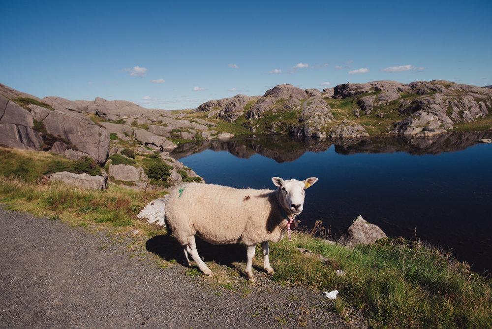 Norwegen-133.jpg