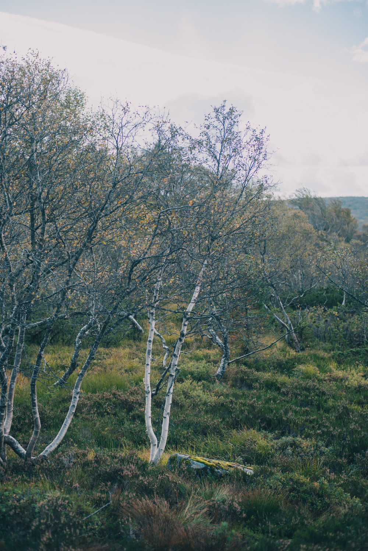 Norwegen-478.jpg