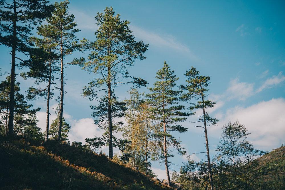 Norwegen-530.jpg
