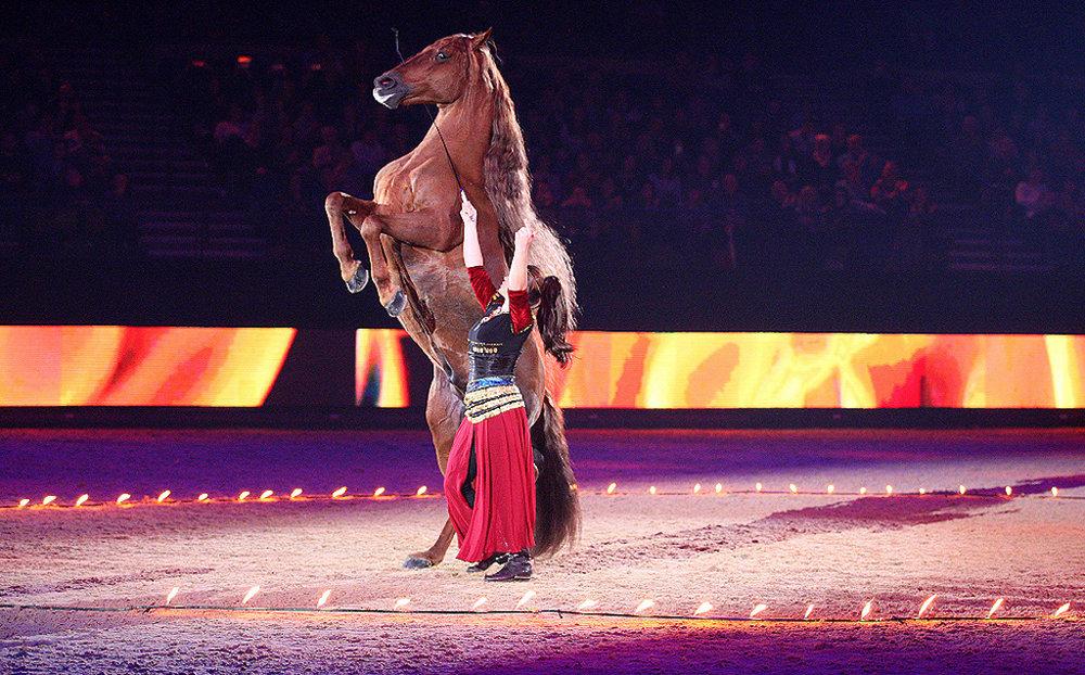 Liverpool International Horse Show, Liverpool, UK (2016)