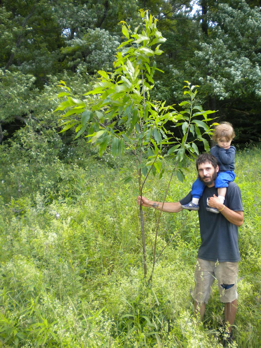 That's my son Cyrus and me, next to a 4 year old American hybrid chestnut.