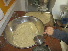 Chestnut flour being scooped out for sifting. Hand crank corn grinder in the background.
