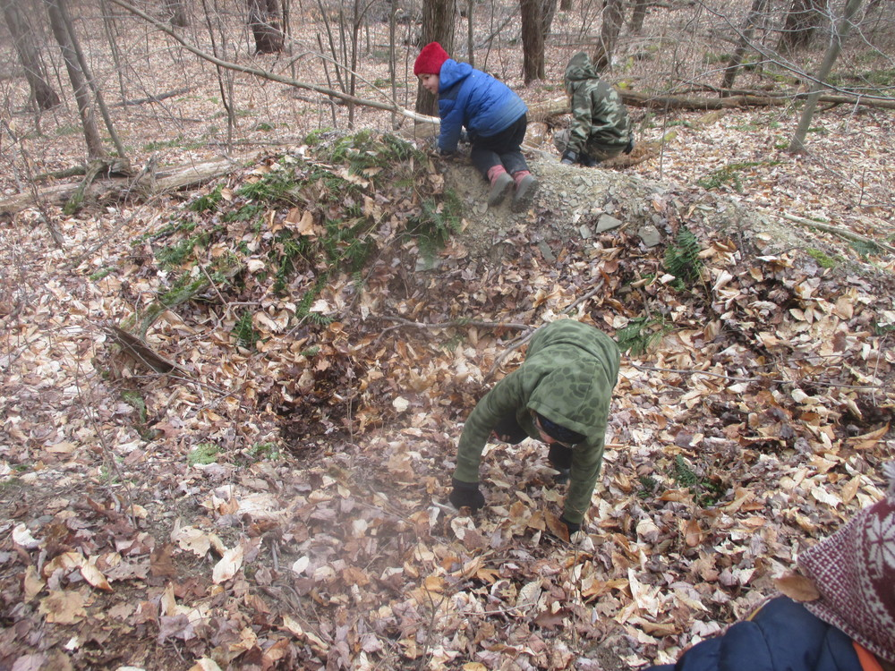 A typical pit and mound in the woods created by an uprooted tree. The consequences of this event are a raised bed, a vernal pool, and increased biodiversity.
