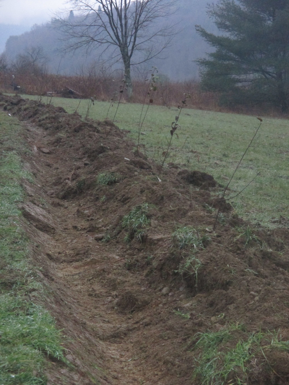 Fruit trees planted on a berm built along the contour of the hillside. Water can collect in front of the trees while the crown of the roots can spread into friable, well drained soil. This was dug with a front loader.