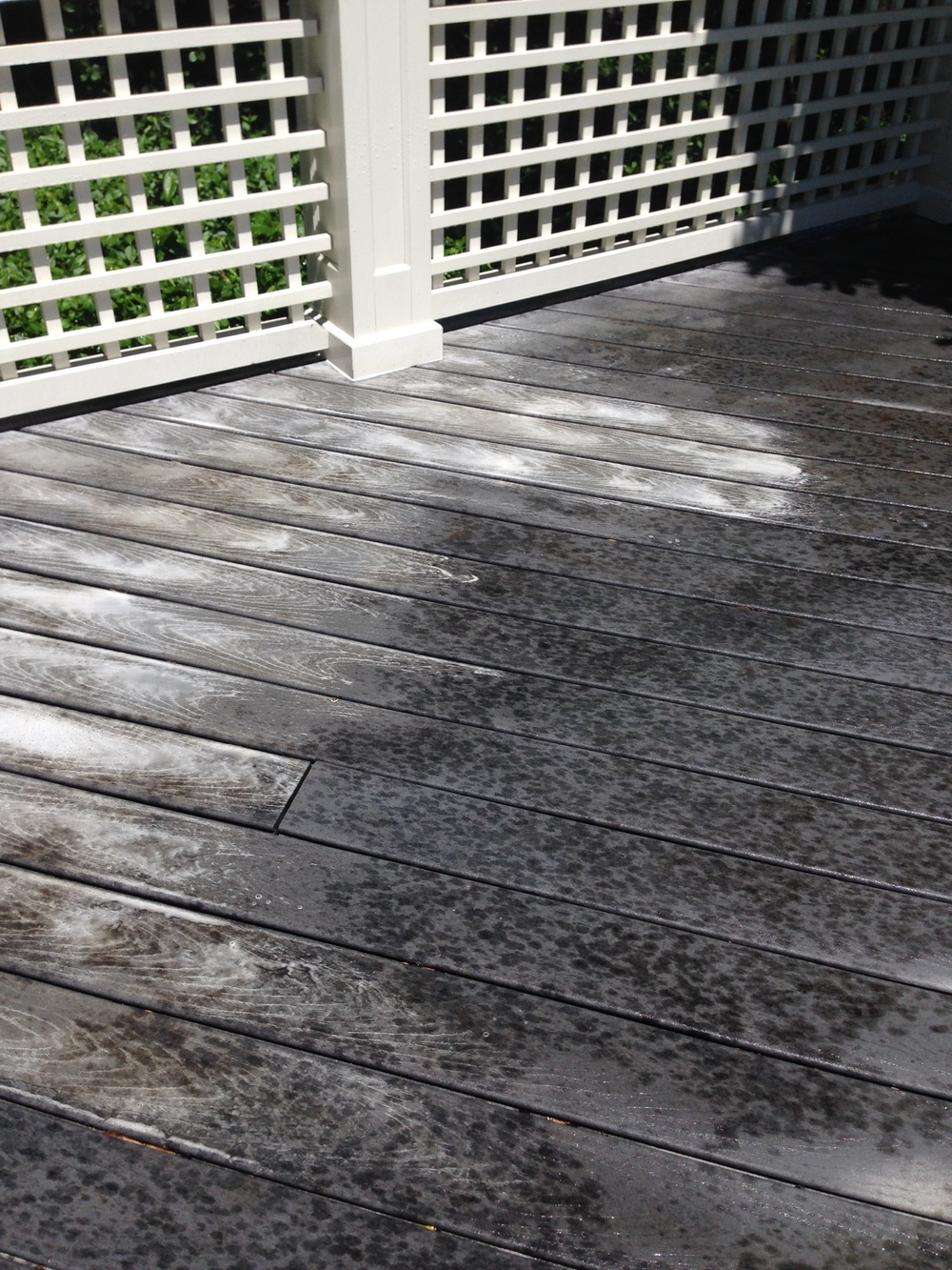 trex decking and mold