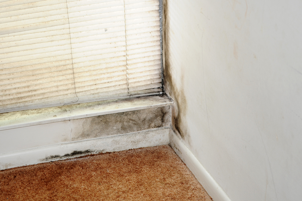 Mold in the home